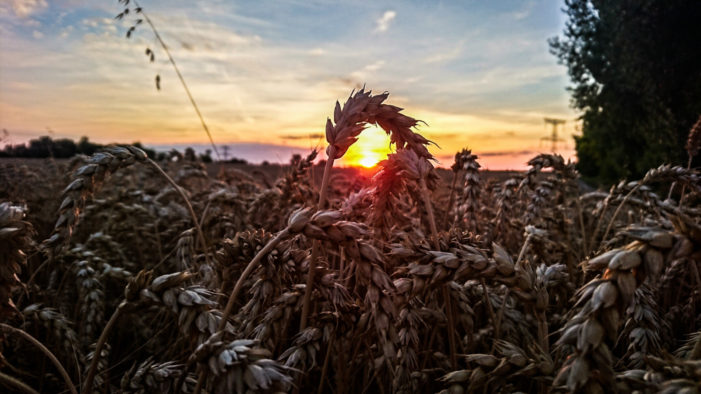 llaacckkoo | Západ slnka | Zariadenie: Sony Xperia Z5 Compact