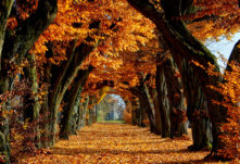 pozadia-jesen-titulka