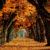 Najkrajšie pozadia pre Android: Jesenný špeciál 2016 #68